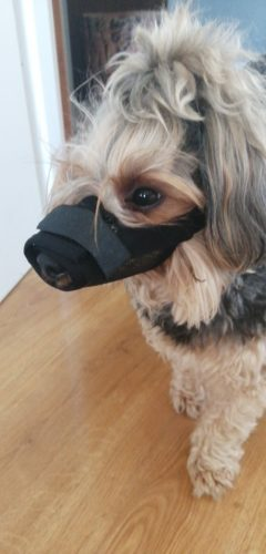Anti Barking Dog Muzzle for Small Large Dogs Adjustable Pet Mouth Muzzles photo review